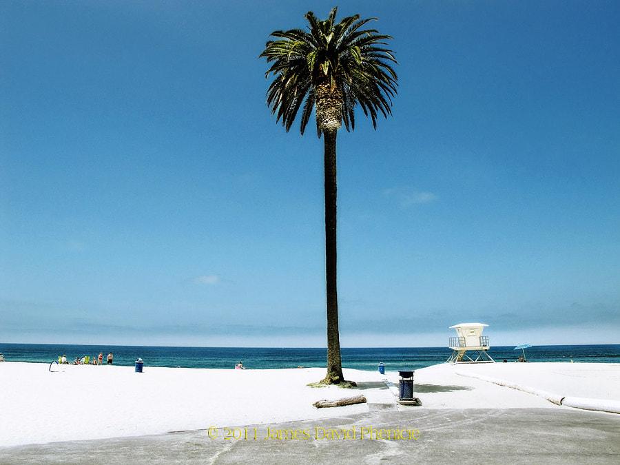 Lone Palm on Moonlight Beach