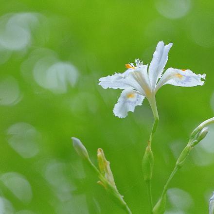 春の花 0860, Canon EOS KISS X9