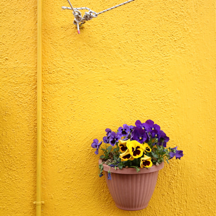 rope, pipe and flowers, Canon EOS 7D, Canon EF-S 10-22mm f/3.5-4.5 USM