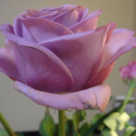 Rose, Sony DSC-QX10