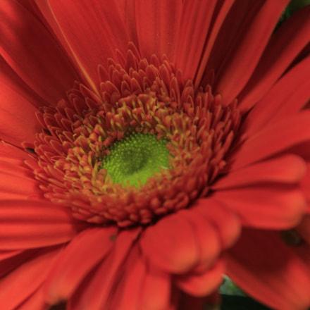Orange Flower, Canon EOS REBEL T2I, Canon EF 28-135mm f/3.5-5.6 IS