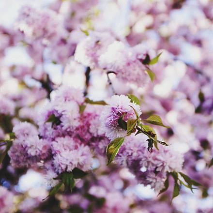 Almost spring, Sony SLT-A77, Carl Zeiss Distagon T* 24mm F2 ZA SSM (SAL24F20Z)