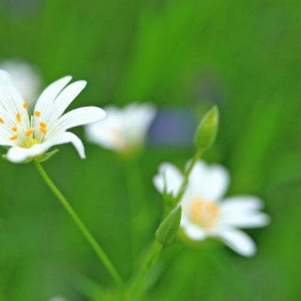 Fleurs des bois, Canon EOS 80D, Canon EF-S 24mm f/2.8 STM