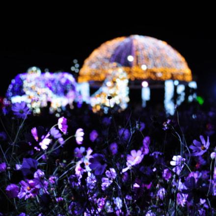 Festival during night time, Nikon D300, AF Zoom-Nikkor 24-85mm f/2.8-4D IF