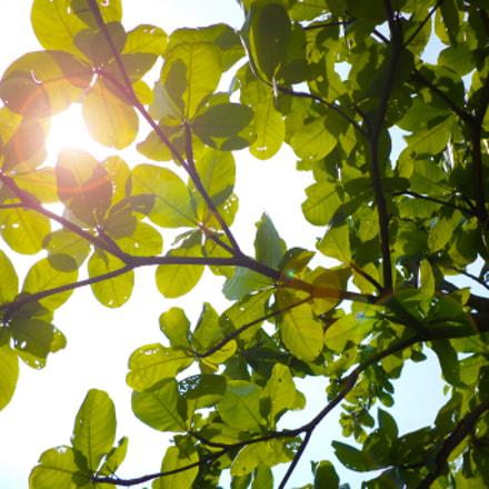 SUN_FLARE, Sony DSC-W620