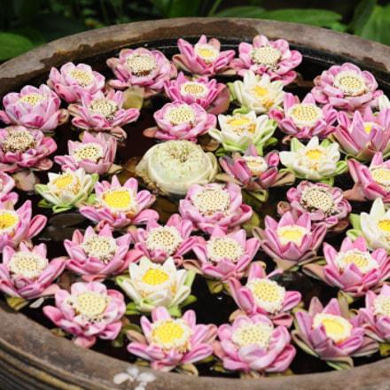 flowers, Nikon D300, AF Zoom-Nikkor 24-85mm f/2.8-4D IF