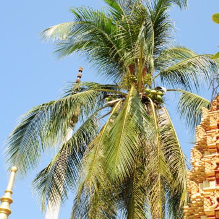 Temple, Nikon D300, AF Zoom-Nikkor 24-85mm f/2.8-4D IF