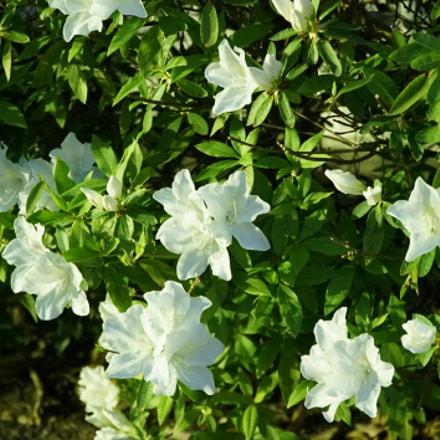 Night flower, Sony ILCE-7S, Sony FE 28-70mm F3.5-5.6 OSS