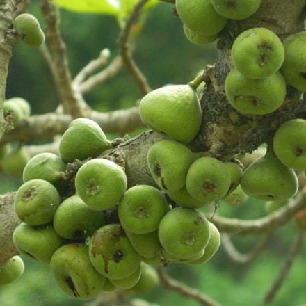 Tree fruits, Nikon COOLPIX L120
