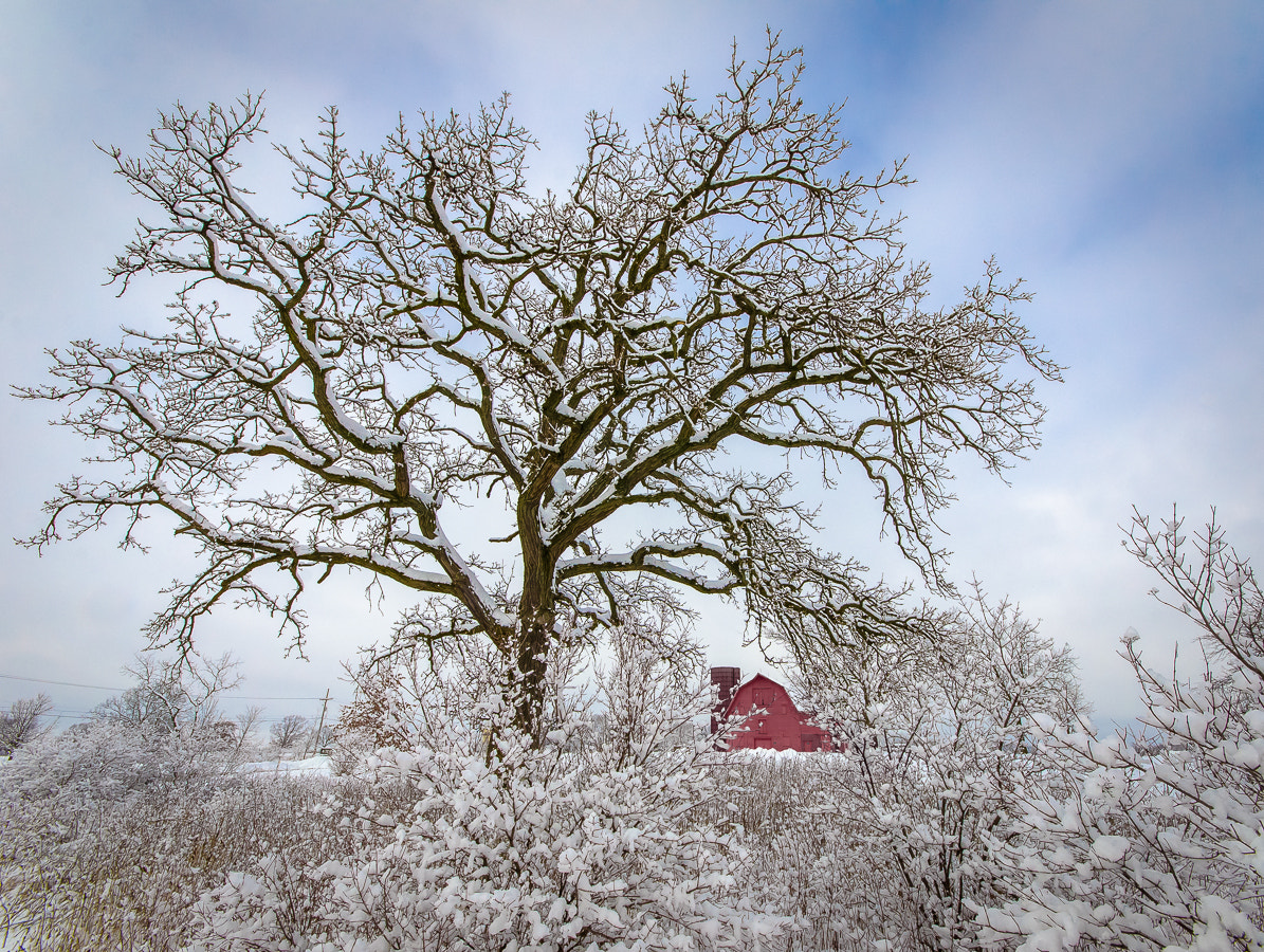 Photograph Oak Farm Winter by Stevan Tontich on 500px