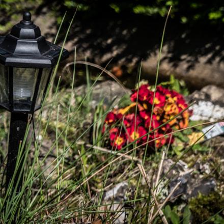 The Small Lamp, Panasonic DMC-FZ330