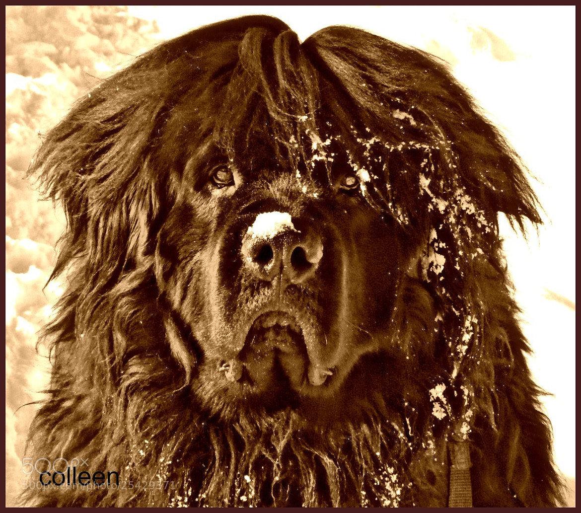 Photograph My Grandog, Timber! by colleen thurgood on 500px