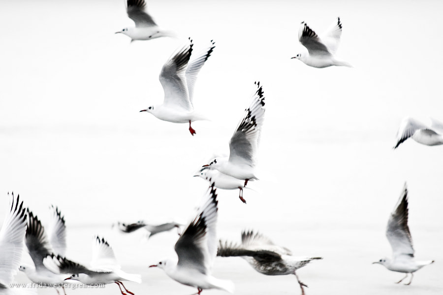 Photograph In the flight by Frida Westergren on 500px