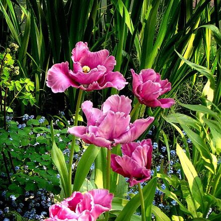 Mr Monet's Garden, Sony DSC-T100