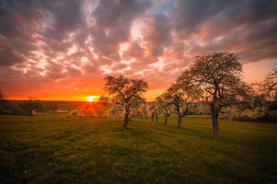 Spring Power de Ralf Thomas sur500px.com