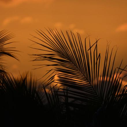 The whispering breeze ...., Nikon D800, AF-S Nikkor 80-400mm f/4.5-5.6G ED VR