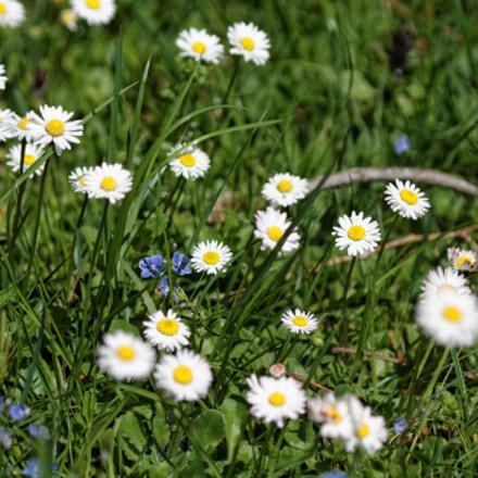 le temps des fleurettes, Canon EOS 1100D, Canon EF 70-210mm f/4