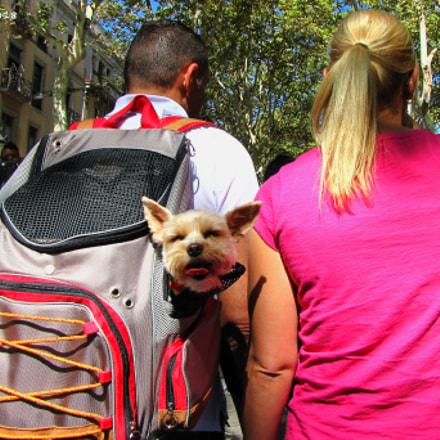 The tourist dog, Canon POWERSHOT SX1 IS