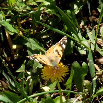 Butterfly, Fujifilm FinePix S2950
