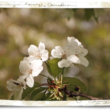 Frühlingsreigen 2 – Romantische Version, Canon POWERSHOT SX240 HS