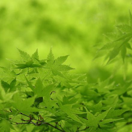 green 0905, Canon EOS KISS X9