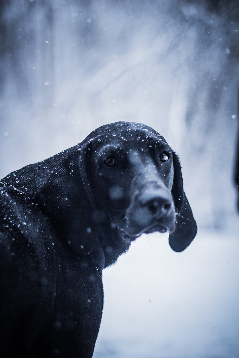 Photograph Jordy During Winter Storm Nemo by James McGraghan on 500px