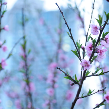 springtime, Nikon D300, AF Zoom-Nikkor 24-85mm f/2.8-4D IF