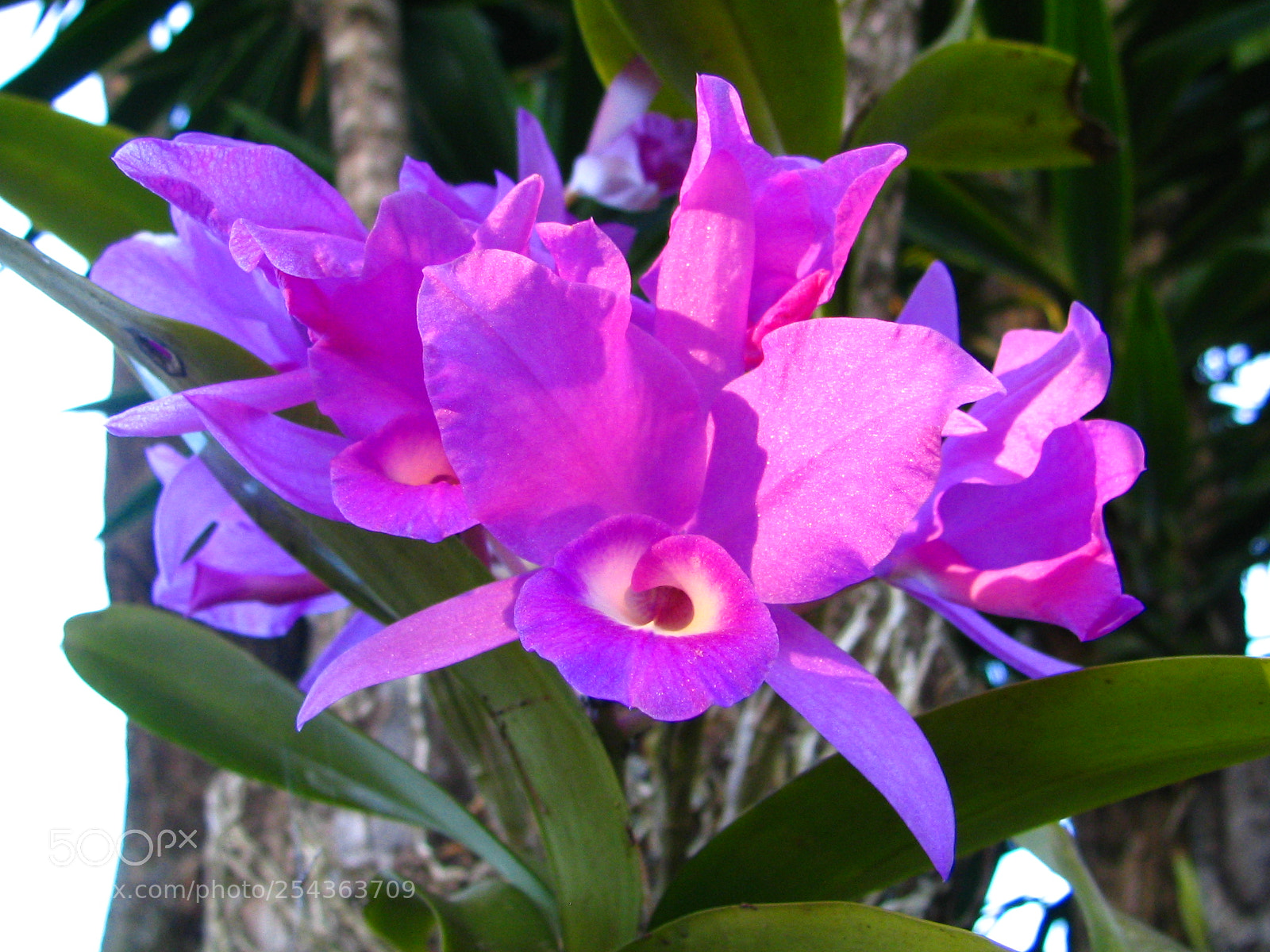 """Canon POWERSHOT S1 IS sample photo. """"Orchid"""" photography"""