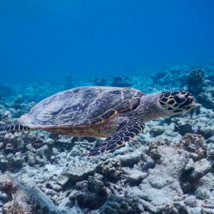 turtle, Nikon COOLPIX AW120