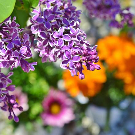 Spring nature......Flowers, Nikon D3200, AF Micro-Nikkor 55mm f/2.8