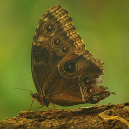 Butterfly, Pentax K200D, smc PENTAX-DA 50-200mm F4-5.6 ED