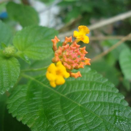 Flower, Sony DSC-W330