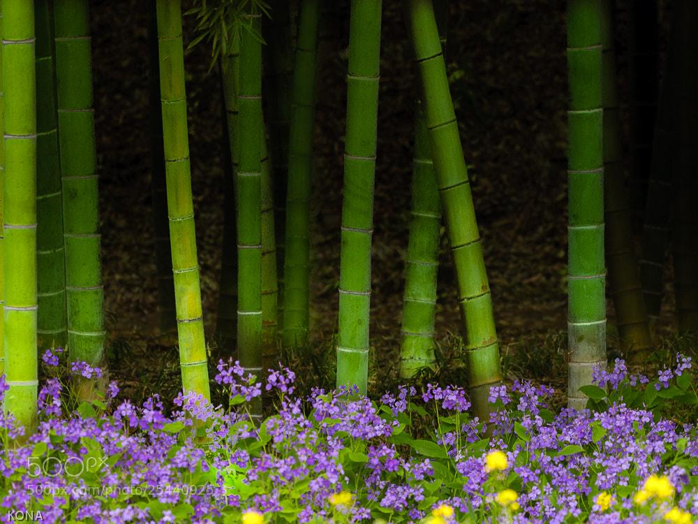 Photograph Bamboo forest by Toru Kona on 500px