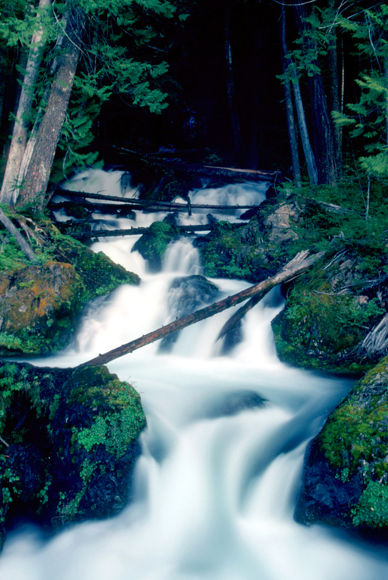 Photograph Film Series - Waterfall in the Olympic National Forest by Glenn McGloughlin on 500px