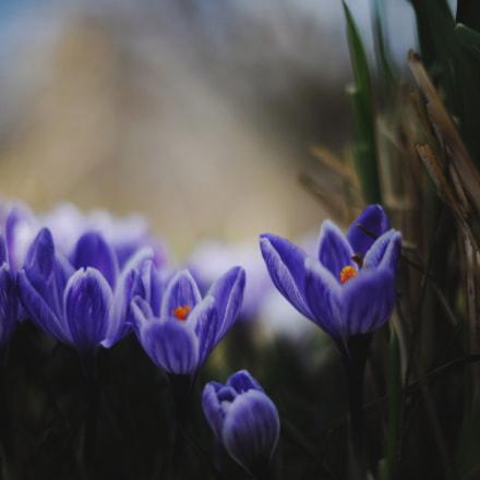Spring'18, Nikon D3X, AF-S Nikkor 50mm f/1.4G