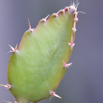 Cactus Color, Nikon D5100, AF-S DX Micro Nikkor 85mm f/3.5G ED VR