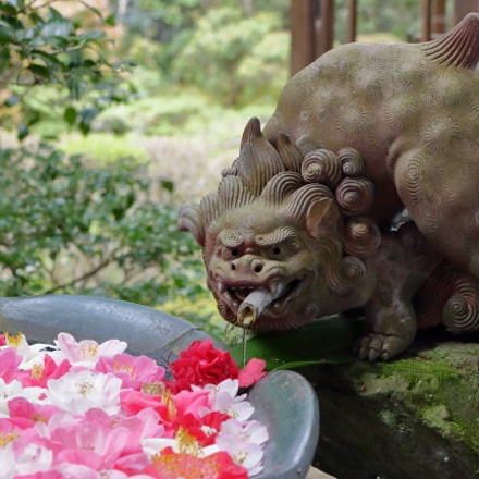 guardian lion-dog, Canon EOS KISS X7, Canon EF-S 18-55mm f/3.5-5.6 IS STM