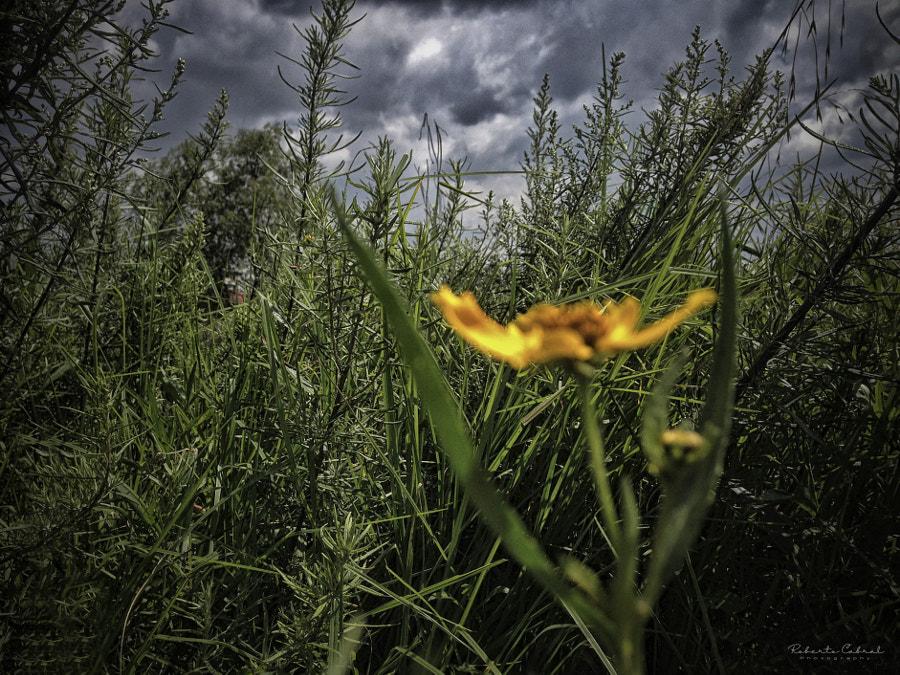 A moment of sleep de Roberto Cabral │Image & Photography en 500px.com