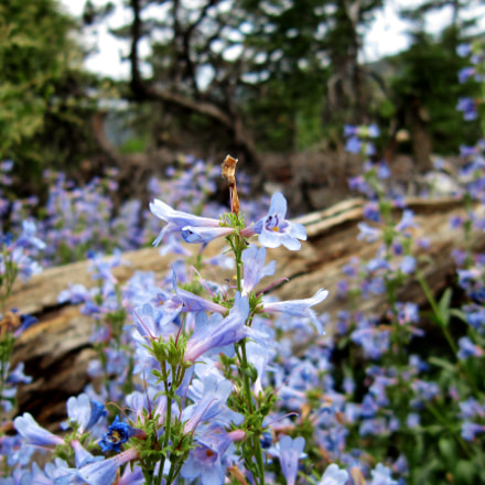 FLowers on Manitou Incline, Canon POWERSHOT A3300 IS