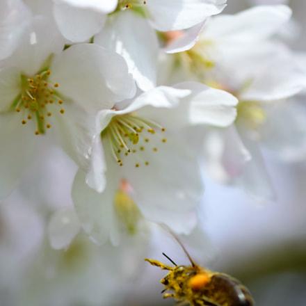 Flying around / Springtime 2018, Nikon D5300, AF-S DX Micro Nikkor 40mm f/2.8G