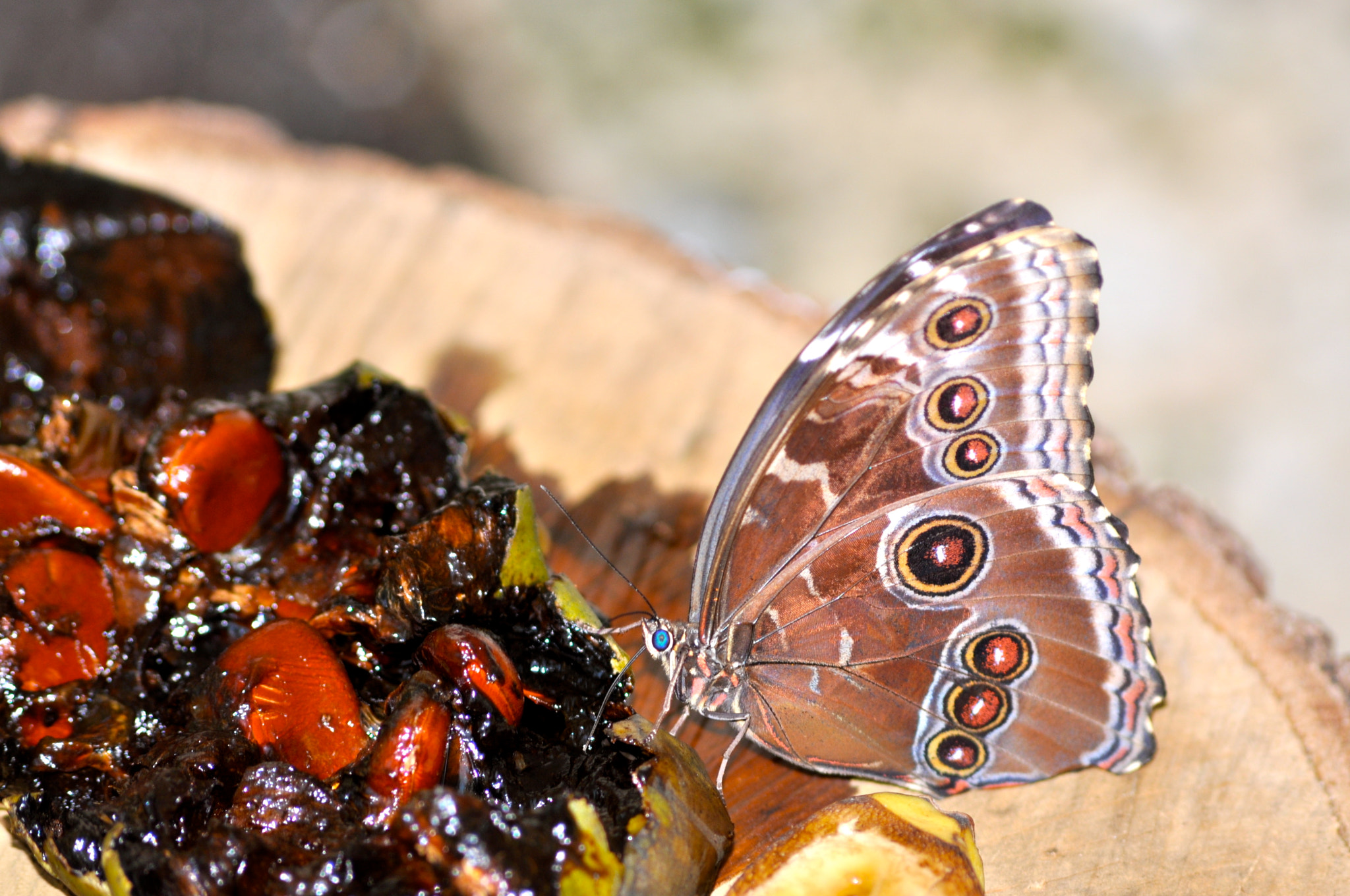 Photograph Butterfly Having Lunch by Vivian Barrios Photography on 500px