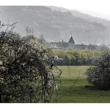 Schl sselblumenwiese bei Liersberg, Canon POWERSHOT SX240 HS