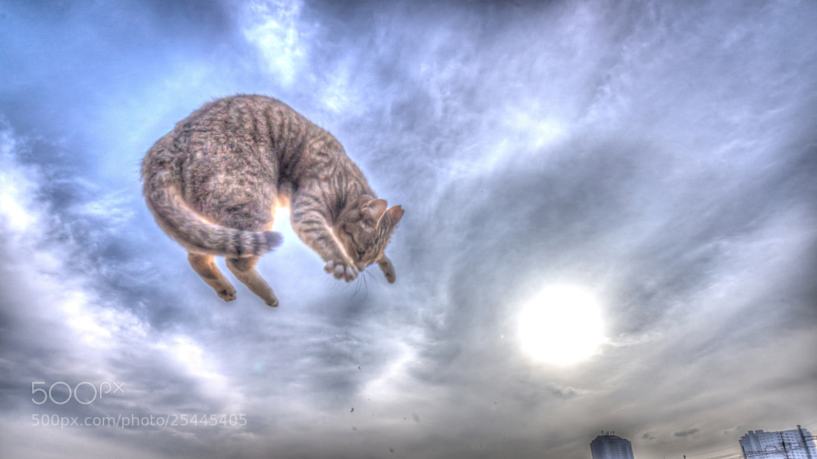 """Photograph The applicants for """"CATWINGS"""" by Seiji Mamiya on 500px"""