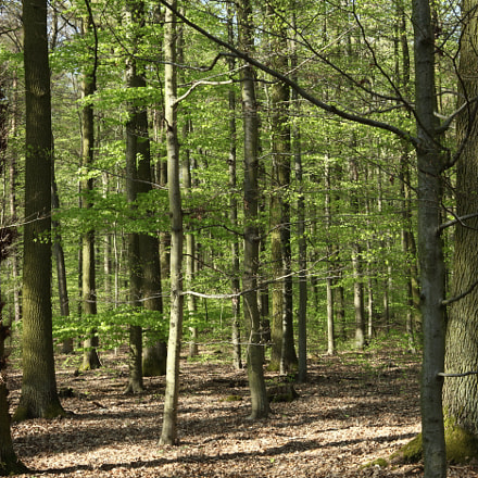 Deciduous Forest, Canon EOS 5D MARK II, Canon EF 28-80mm f/3.5-5.6