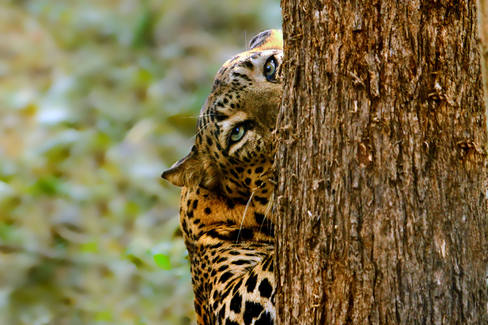 Photograph Are you looking for me? by Nitin  Prabhudesai on 500px
