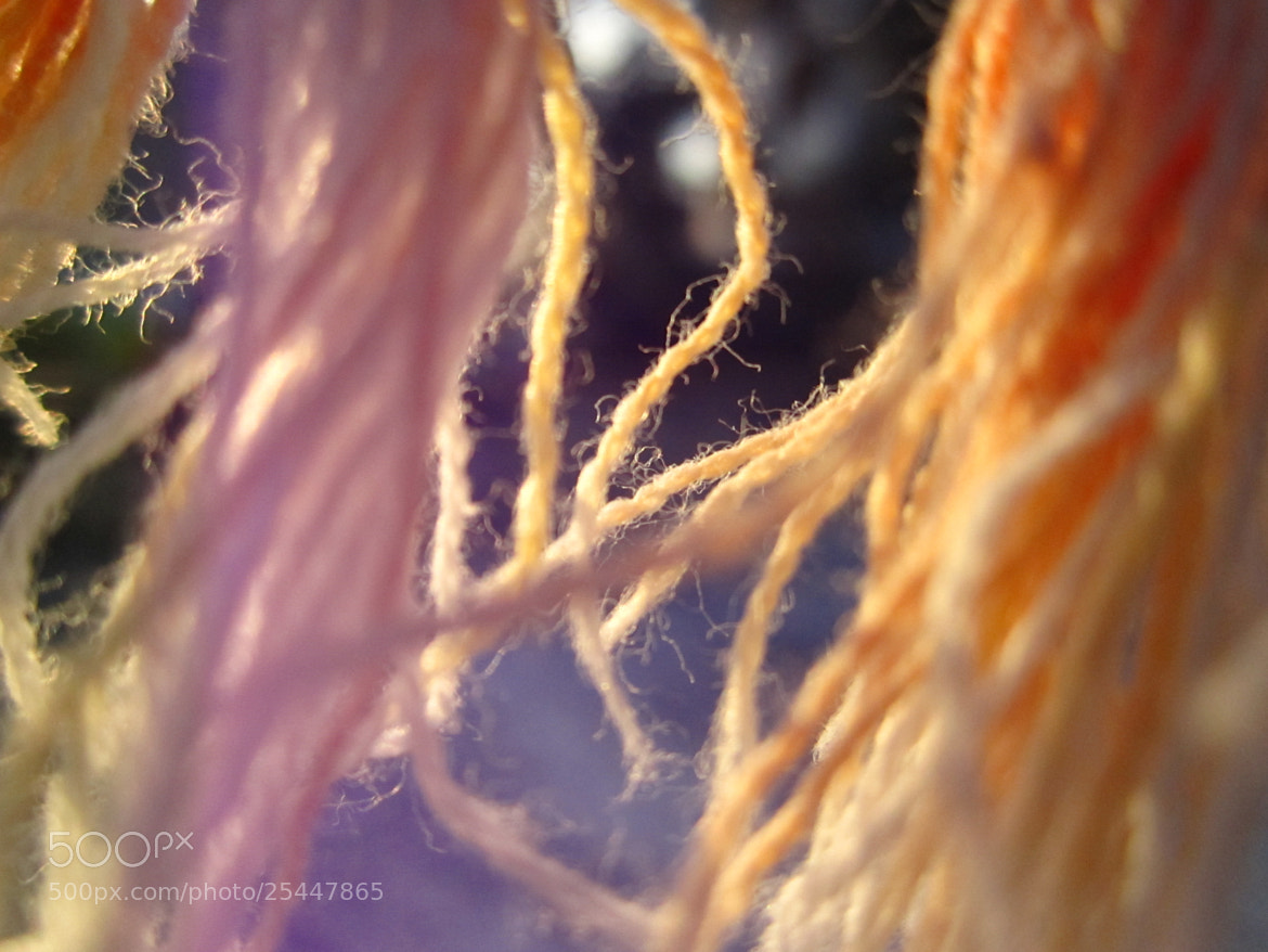 Photograph The wool strands by Dilip Singh on 500px
