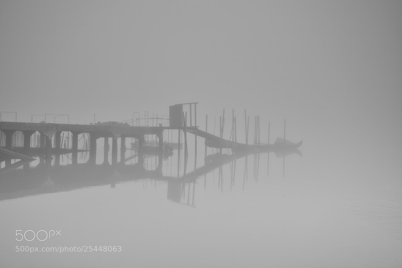"Photograph Foggy Morning by Carlos Silva ""Avlisilva"" on 500px"