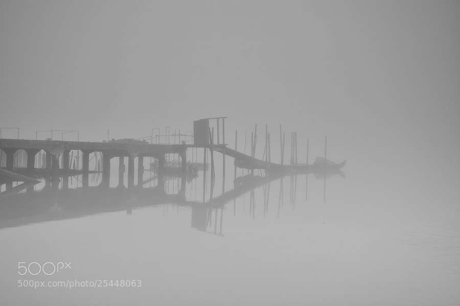 "Photograph Foggy Morning by Carlos Silva ""Avlisilva"" on 500px"