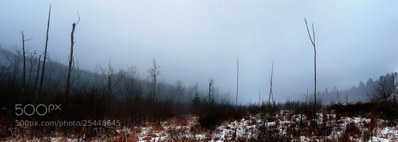 Photograph Swamp Logs by Matt H on 500px