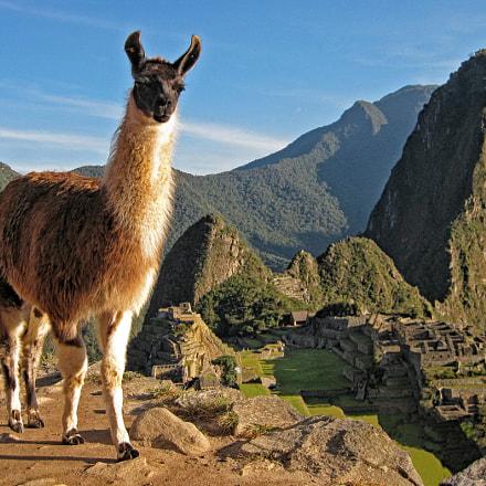 Llama at Machu Picchu, Canon POWERSHOT SD1100 IS